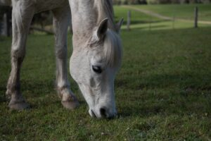 Best Weed Killer For Horse Pasture