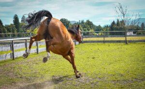 Best Fertilizer For Horse Pastures